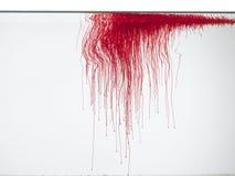 Couleur rouge dans l'eau Photographie stock libre de droits
