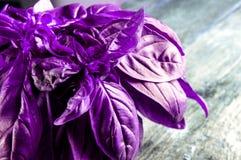 Couleur ultra-violette de 2018 Basilic organique frais vert sur la table en bois Type rustique Photographie stock libre de droits