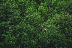Couleur verte d'arbre Image libre de droits