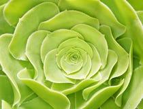 Couleur verte de fleur Images stock