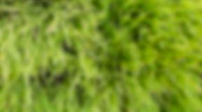 Couleur verte trouble Image stock