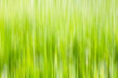 Couleur verte trouble Images libres de droits