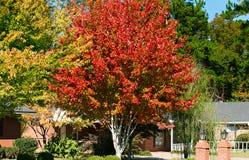 Couleur vibrante d'automne image libre de droits