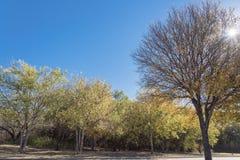 Couleur vibrante de feuillage d'automne le long de rivière à Dallas suburbain, le Texas, parc vibrant de ville d'USABeautiful ave images libres de droits