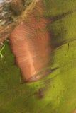 Couleur vive de roche Photo libre de droits