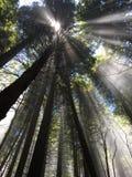Couleurs étonnantes au-dessous des arbres avec la lumière du soleil Images libres de droits