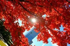 Couleurs étonnantes d'automne Photo libre de droits