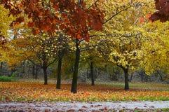 Couleurs 005 d'automne Photos libres de droits