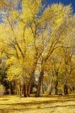 Couleurs 11 d'automne Image libre de droits