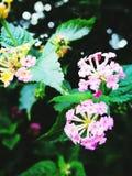couleurs Photos stock