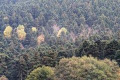 Couleurs ardentes d'automne Images stock