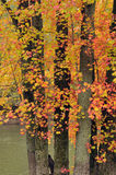 Couleurs brillantes d'automne Photos libres de droits