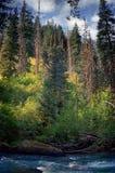 Couleurs brillantes dans les bois avec l'effet Painterly Photographie stock