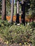 Couleurs brillantes de chute dans les forêts Image stock