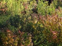 Couleurs brillantes de chute dans les forêts Images stock