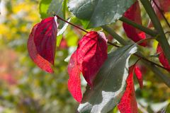 Couleurs d'été d'Autumn September Indian des feuilles et des arbres sur un b photos libres de droits