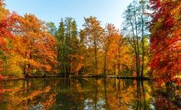 Couleurs d'or étonnantes d'automne dans la voie de chemin forestier Ramassage d'automne Images libres de droits