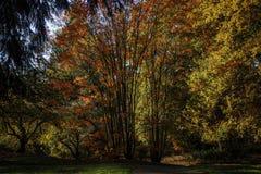 Couleurs 2 d'automne images stock