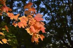 Couleurs 9 d'automne Photographie stock