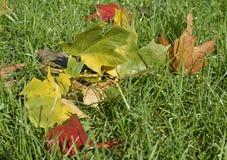 Couleurs 9 d'automne Photo libre de droits