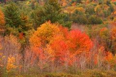 Couleurs d'automne Images stock