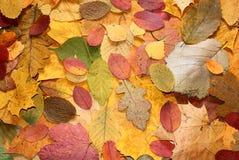 Couleurs d'automne. Photo stock