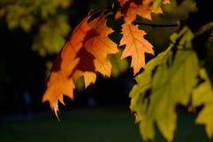 Couleurs d'automne. Image libre de droits
