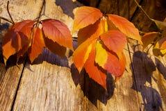 Couleurs d'automne photos libres de droits