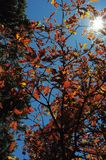 Couleurs d'automne Photo stock