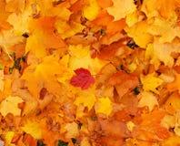Couleurs 9 d'automne Photographie stock libre de droits
