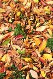Couleurs d'automne Photos stock