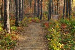 Couleurs d'automne Photo libre de droits