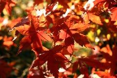 Couleurs 9 d'automne photos libres de droits