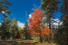 Couleurs d'automne Images libres de droits