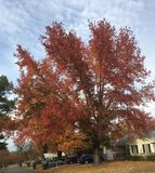 Couleurs d'automne Photographie stock libre de droits