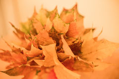 Couleurs 9 d'automne photo stock