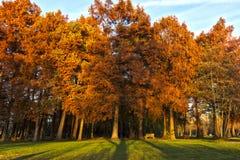Couleurs d'automne au parc Photo stock