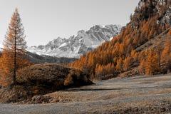 Couleurs d'automne aux Alpes de Devero Image stock