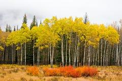 Couleurs d'automne d'automne photographie stock