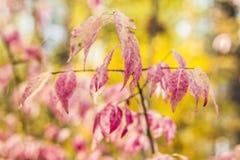 Couleurs d'automne d'or les meilleures Photos stock
