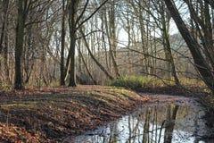 Couleurs d'automne dans forrest pendant l'hiver Images stock