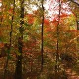Couleurs d'automne dans la forêt photographie stock