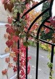 Couleurs d'automne dans le jardin image libre de droits