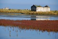 Couleurs d'automne dans le marais de sel image stock