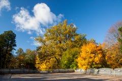 Couleurs d'automne dans les arbres image stock