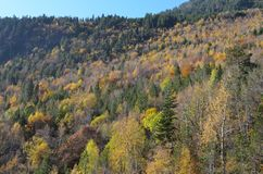 Couleurs d'automne dans les forêts mélangées de parc naturel de Posets-Maladeta, Espagnol Pyrénées Photos libres de droits
