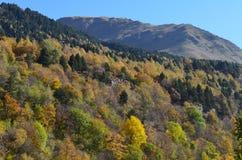 Couleurs d'automne dans les forêts mélangées de parc naturel de Posets-Maladeta, Espagnol Pyrénées Photo stock