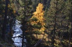 Couleurs d'automne dans les forêts mélangées de parc naturel de Posets-Maladeta, Espagnol Pyrénées Images stock