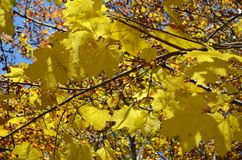 Couleurs d'automne dans les forêts mélangées de parc naturel de Posets-Maladeta, Espagnol Pyrénées Photographie stock libre de droits