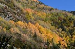 Couleurs d'automne dans les forêts mélangées de parc naturel de Posets-Maladeta, Espagnol Pyrénées Photos stock